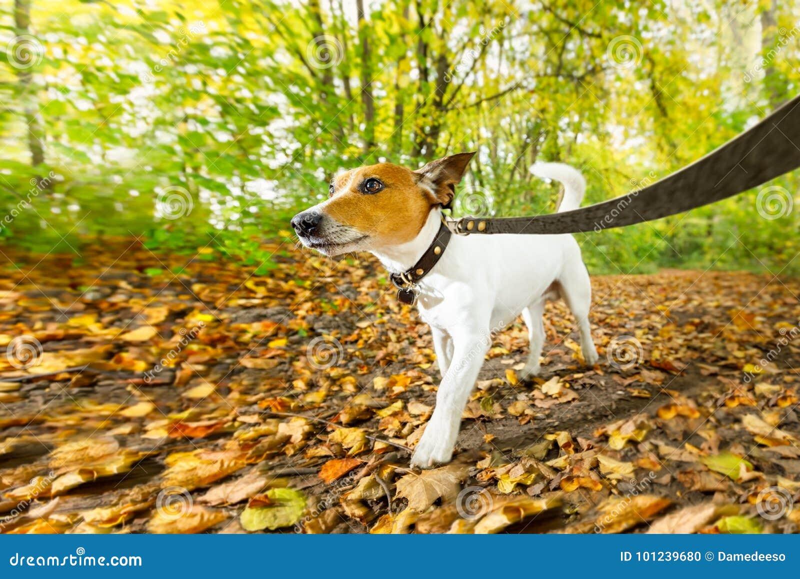Hundspring eller gå i höst