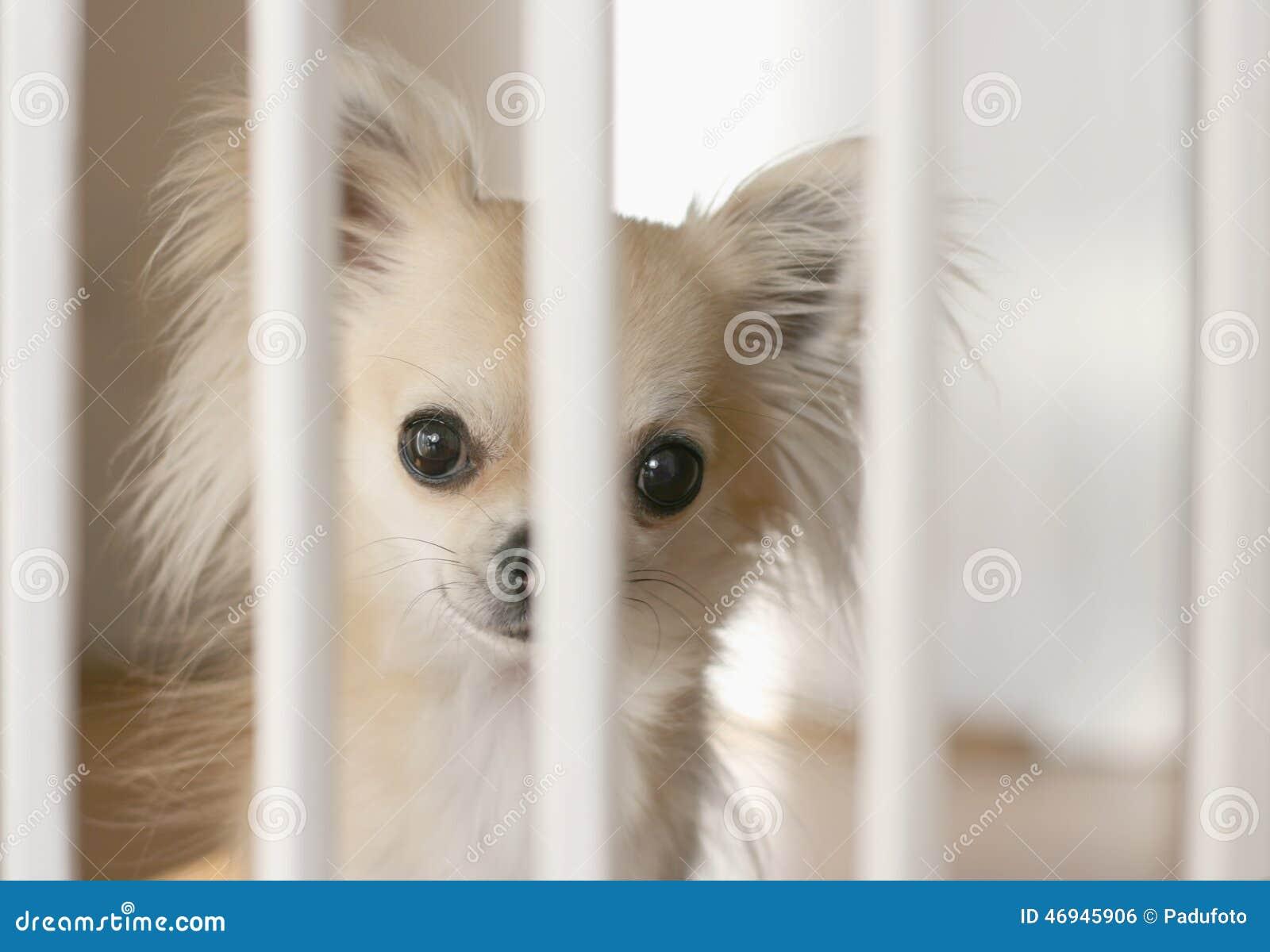 Staket hundstaket : Hundstaket inomhus arkivfoto. Bild av utgångspunkt, sorgsenhet ...