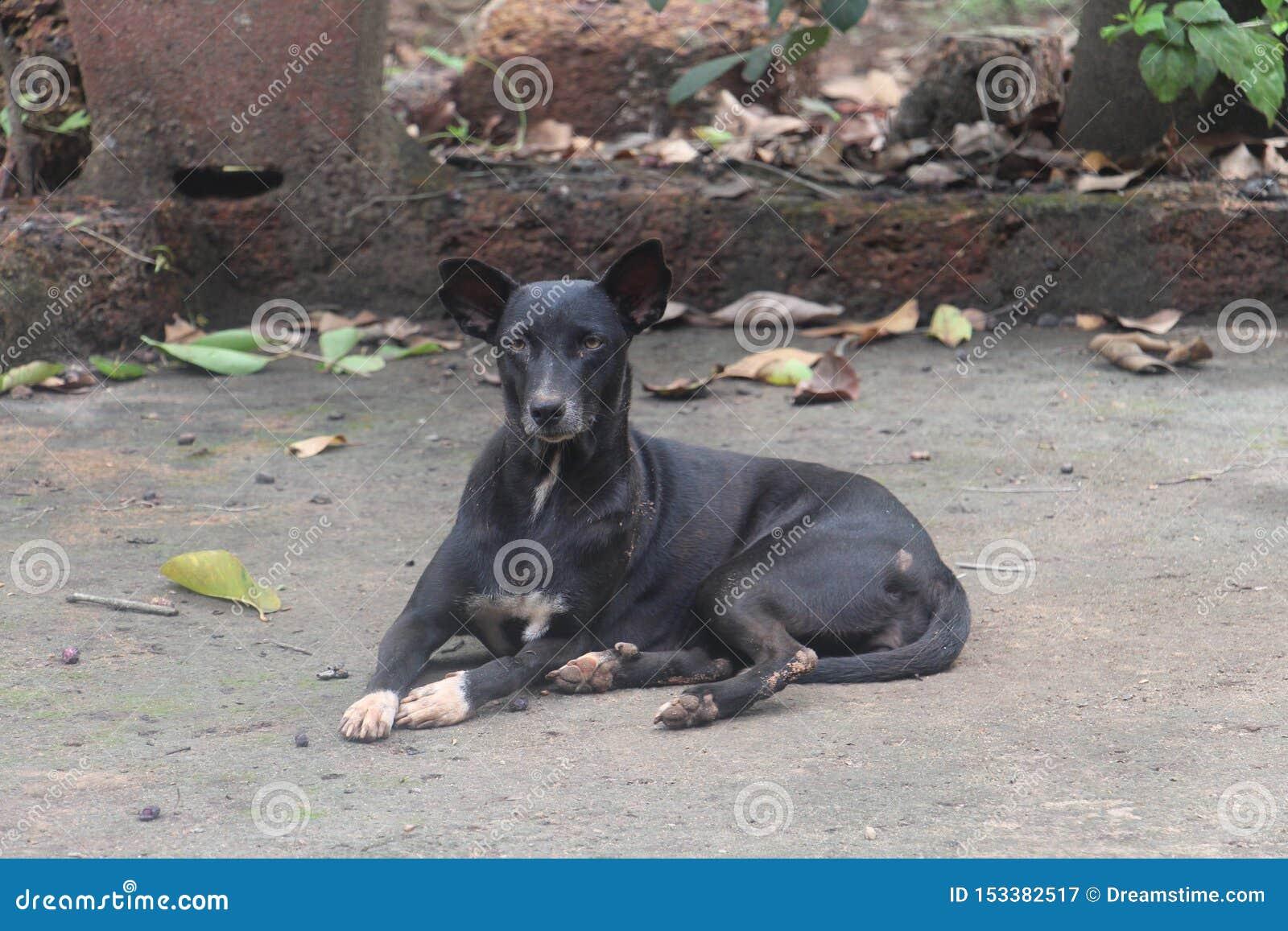 Hundsvart