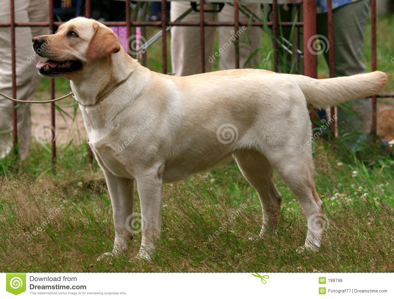 Hundthoroughbred
