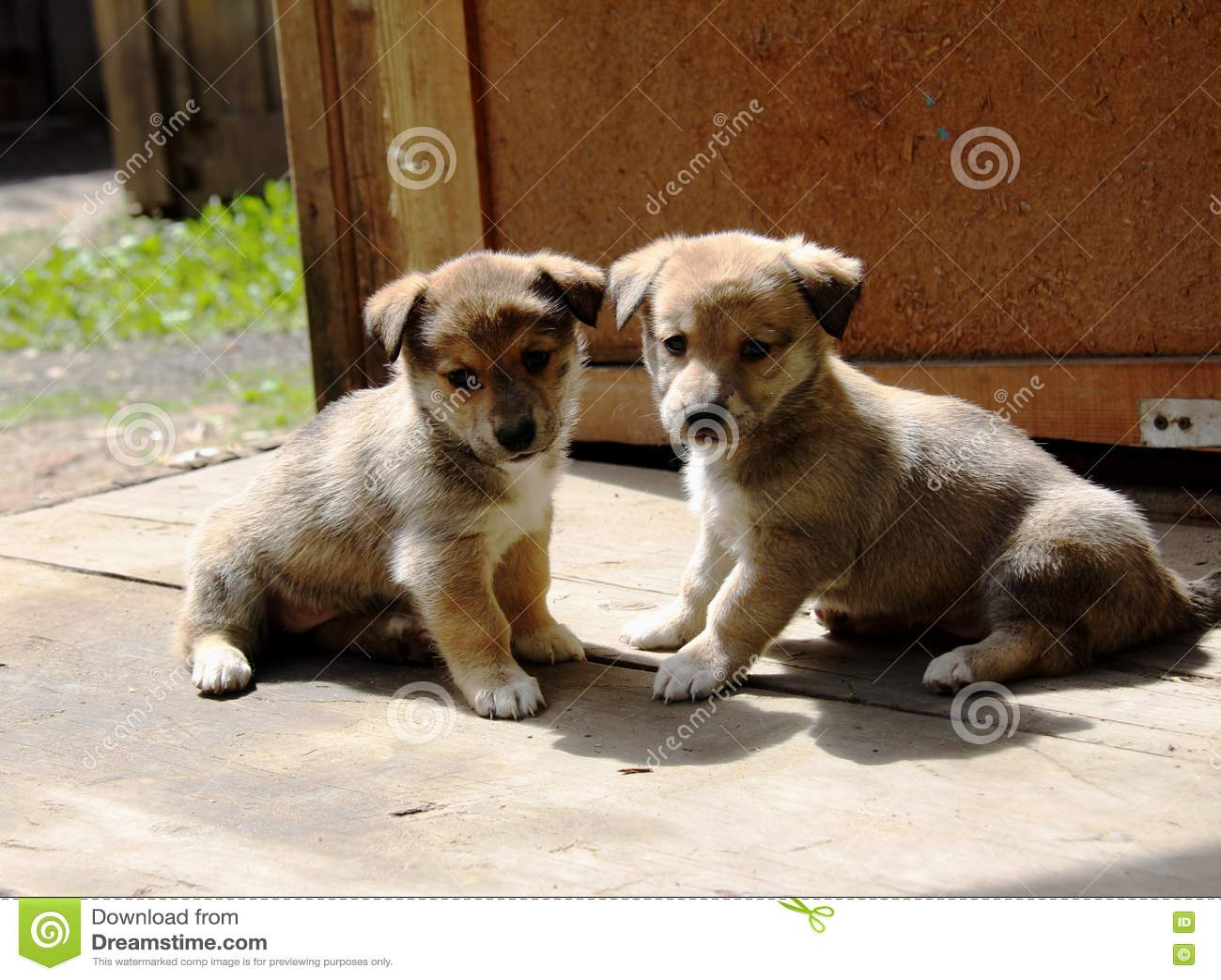 Gratis Bilder Hundvalpar