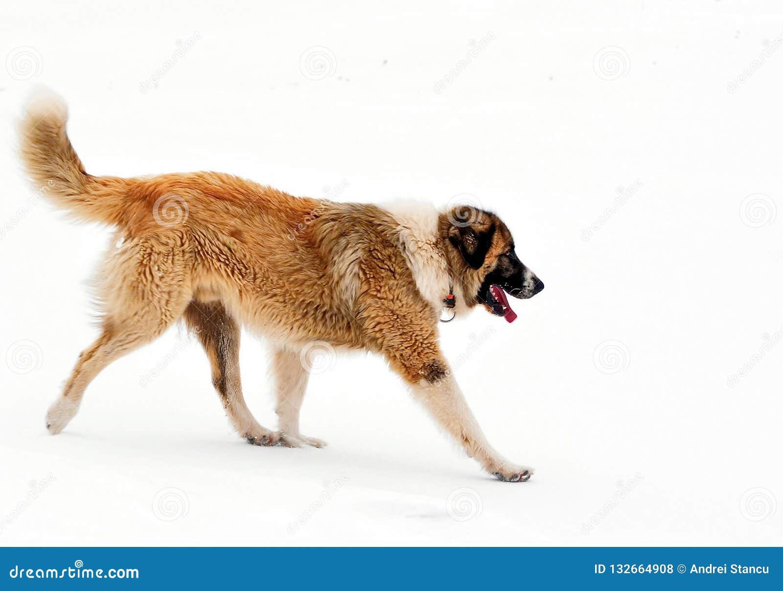 Hundvinter