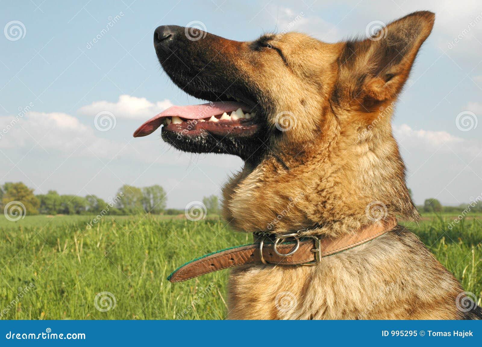 Hundwolf