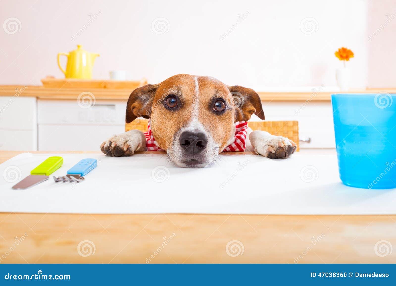 Hungrig hund