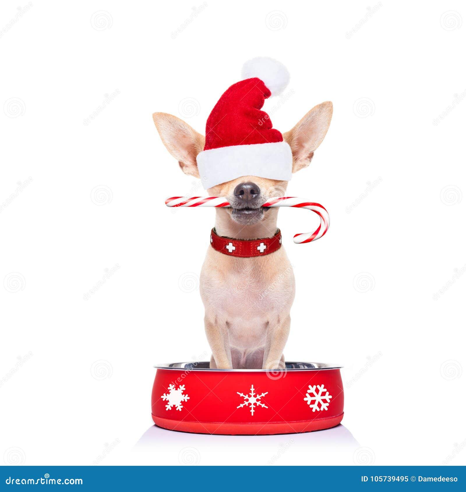 Hungrig Santa Claus hund inom matskålen