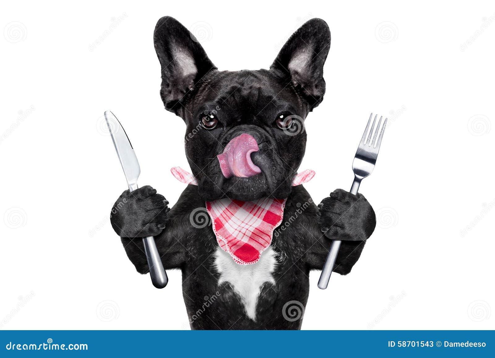 Hungriger Hund