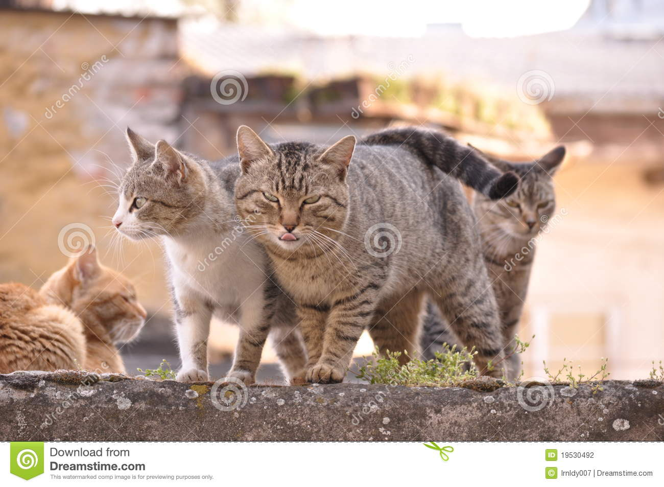 Hungry Cats Stock Photo Image Of Green Eyes Strike