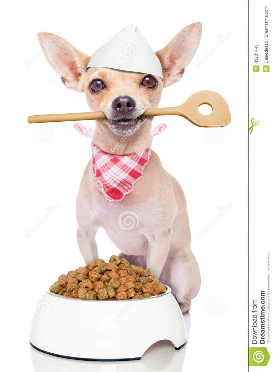 Dog Holding Dog Food In Mouth
