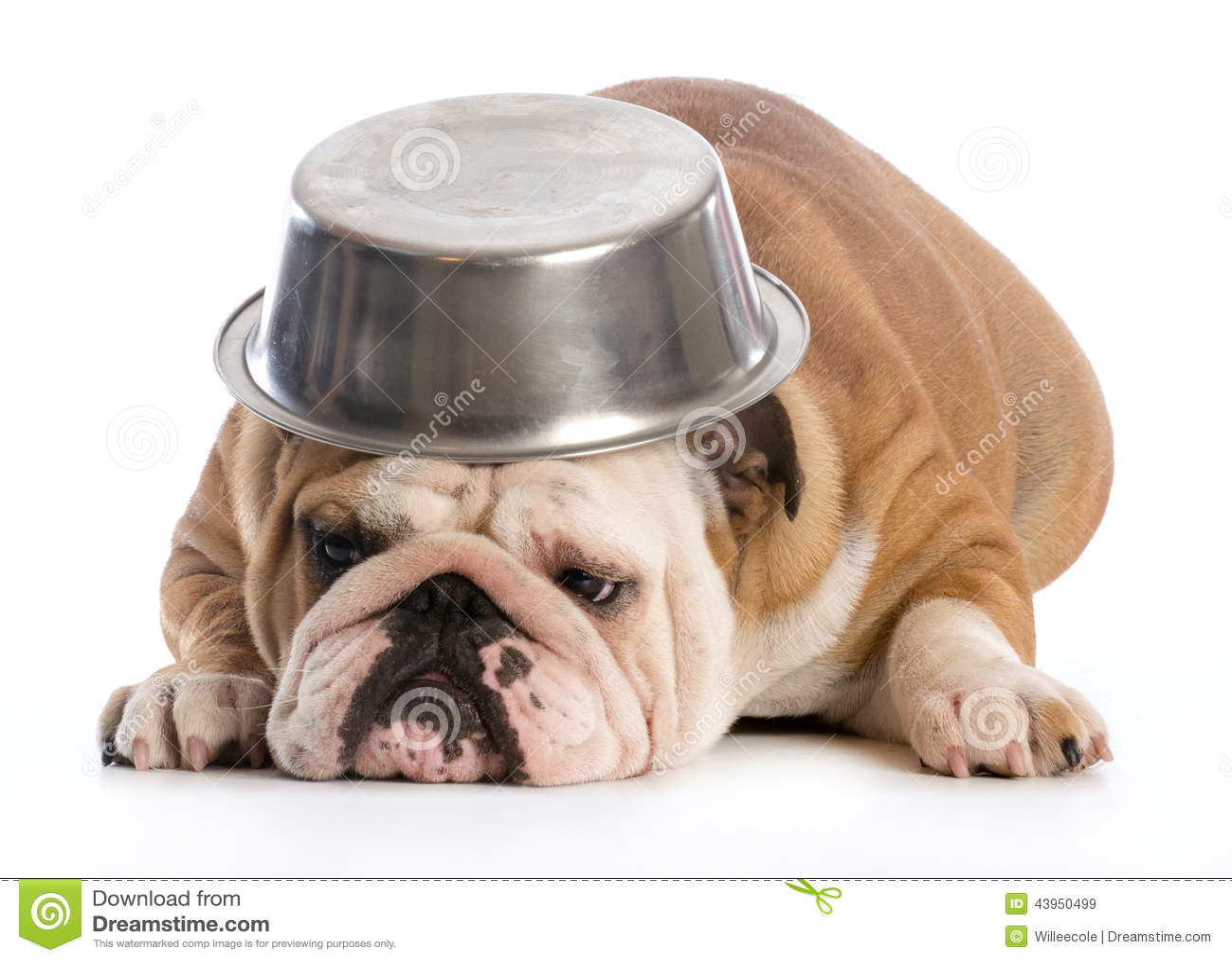 Buy Blue Dog Food