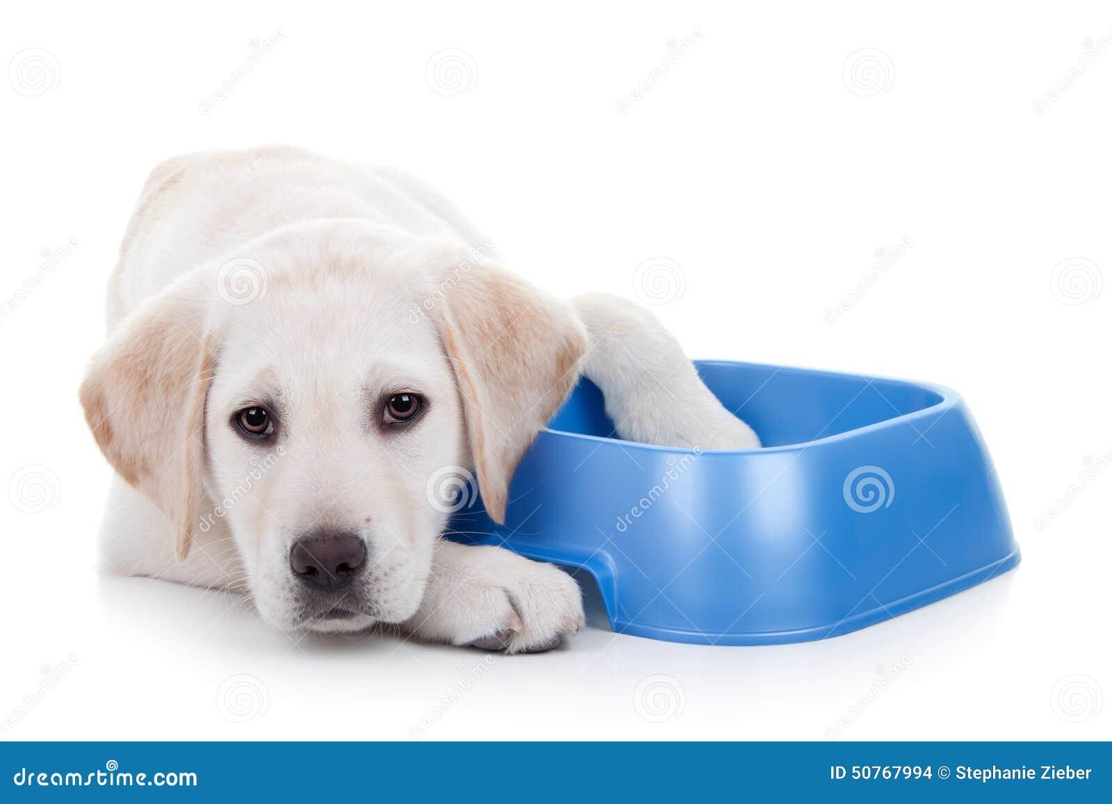 Hungry dog stock photo image 50767994 for Fish based dog food