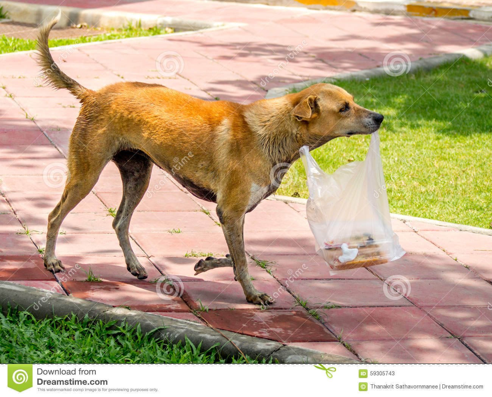 dog carrying bag of food