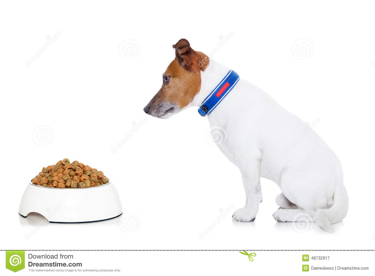 Eating Out Of A Dog Bowl