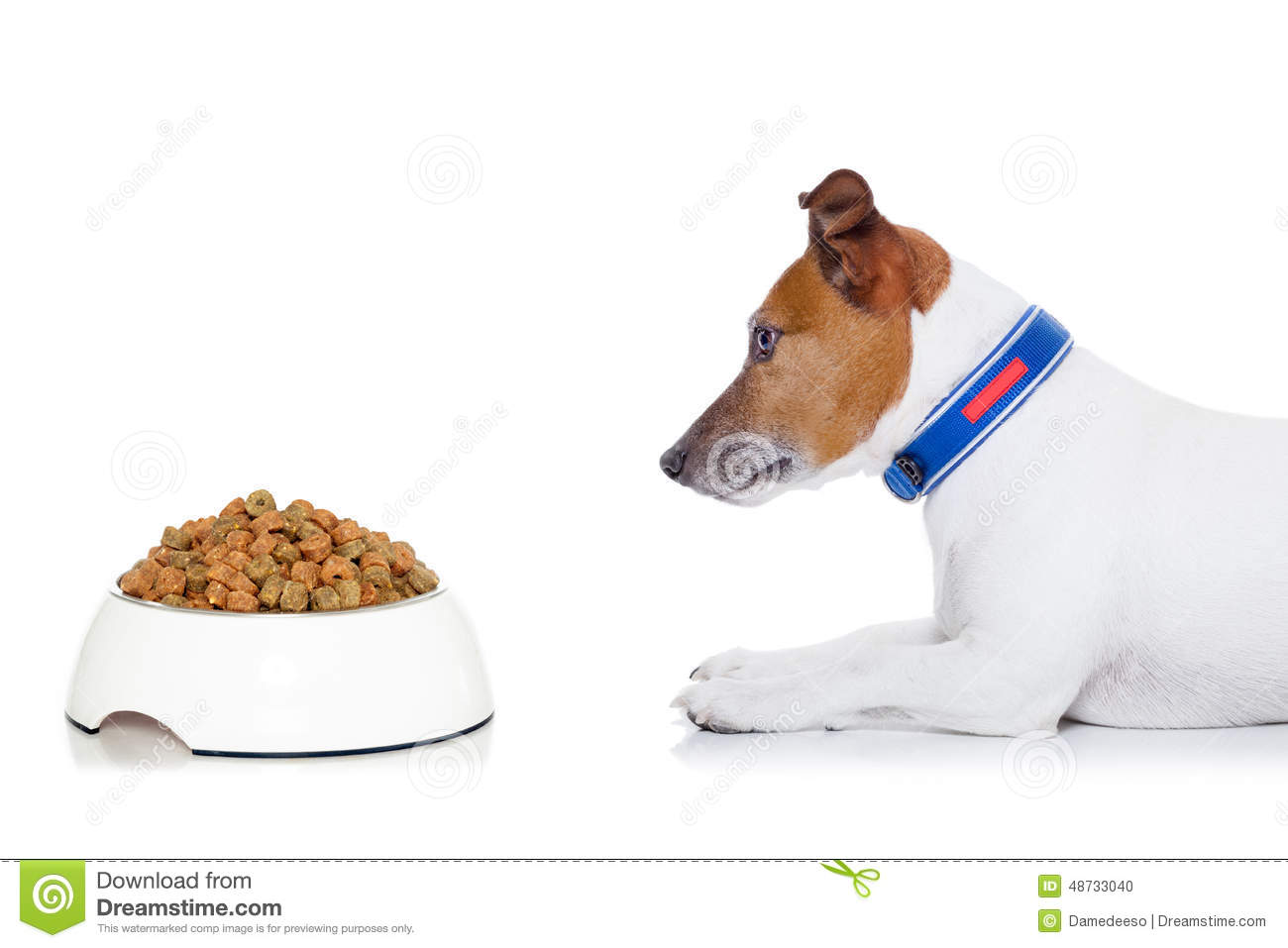 Hungry Dog Stock Photo Image Of Background Jack Lick