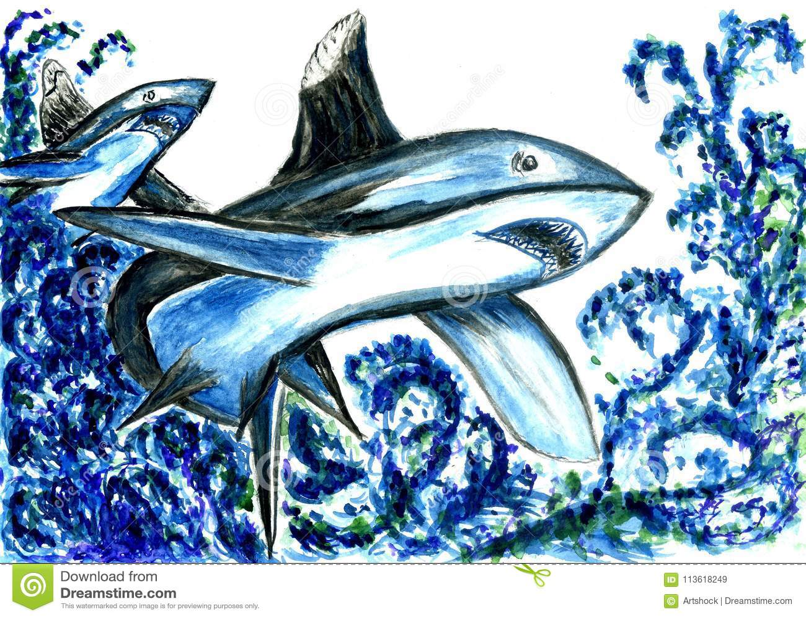 Hungry Shark Drawing stock illustration  Illustration of