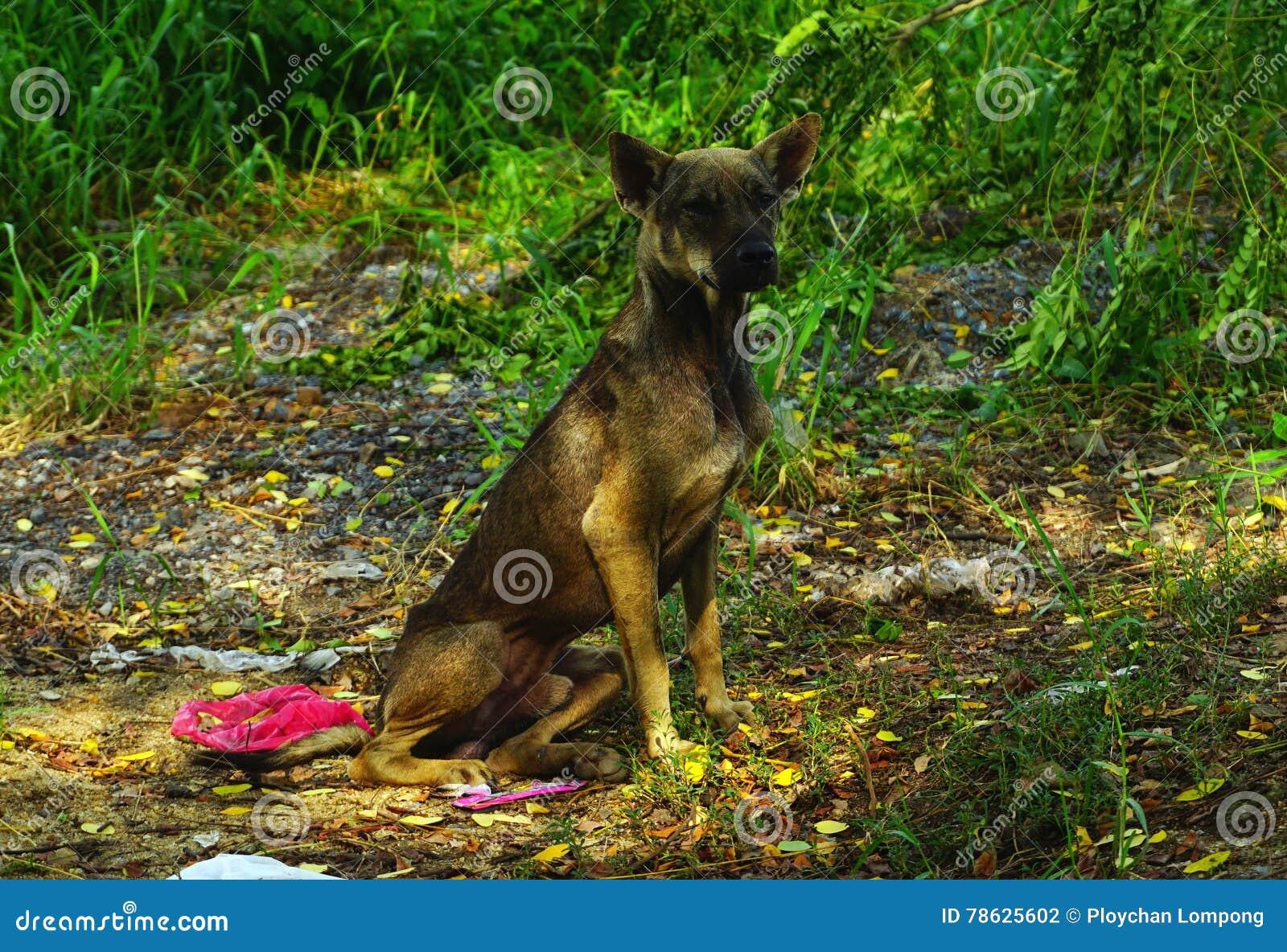 Hungry stray dog homeless