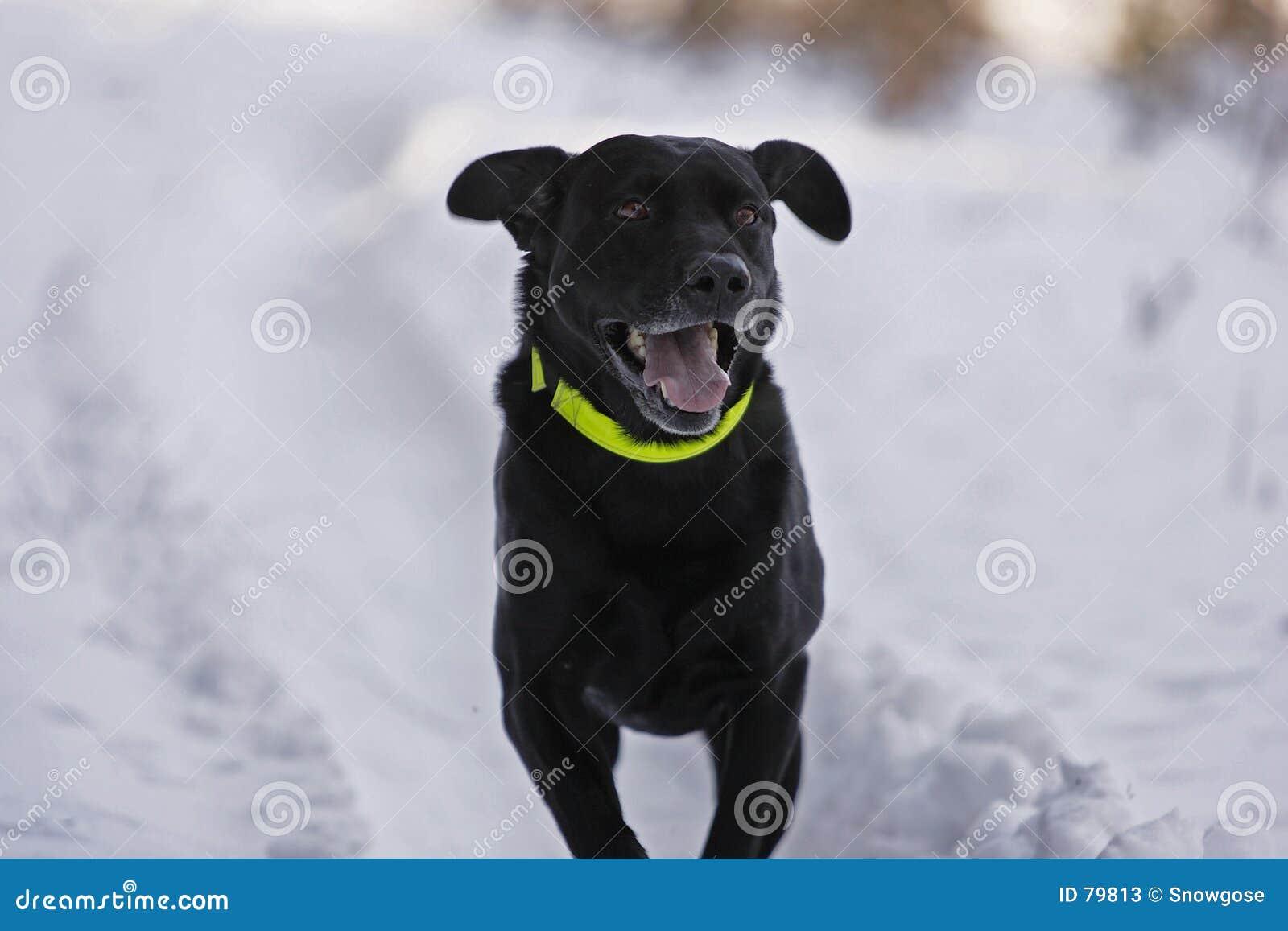 Hunt psa