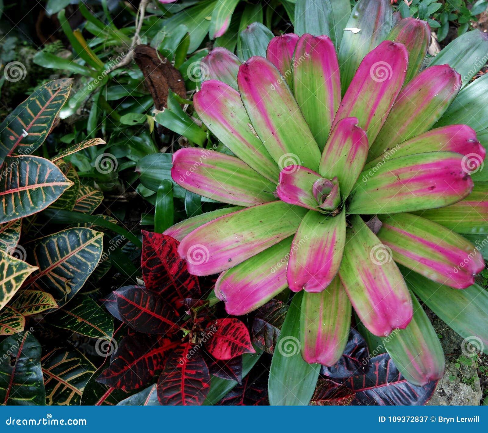 Hunte-` s Gärten Barbados