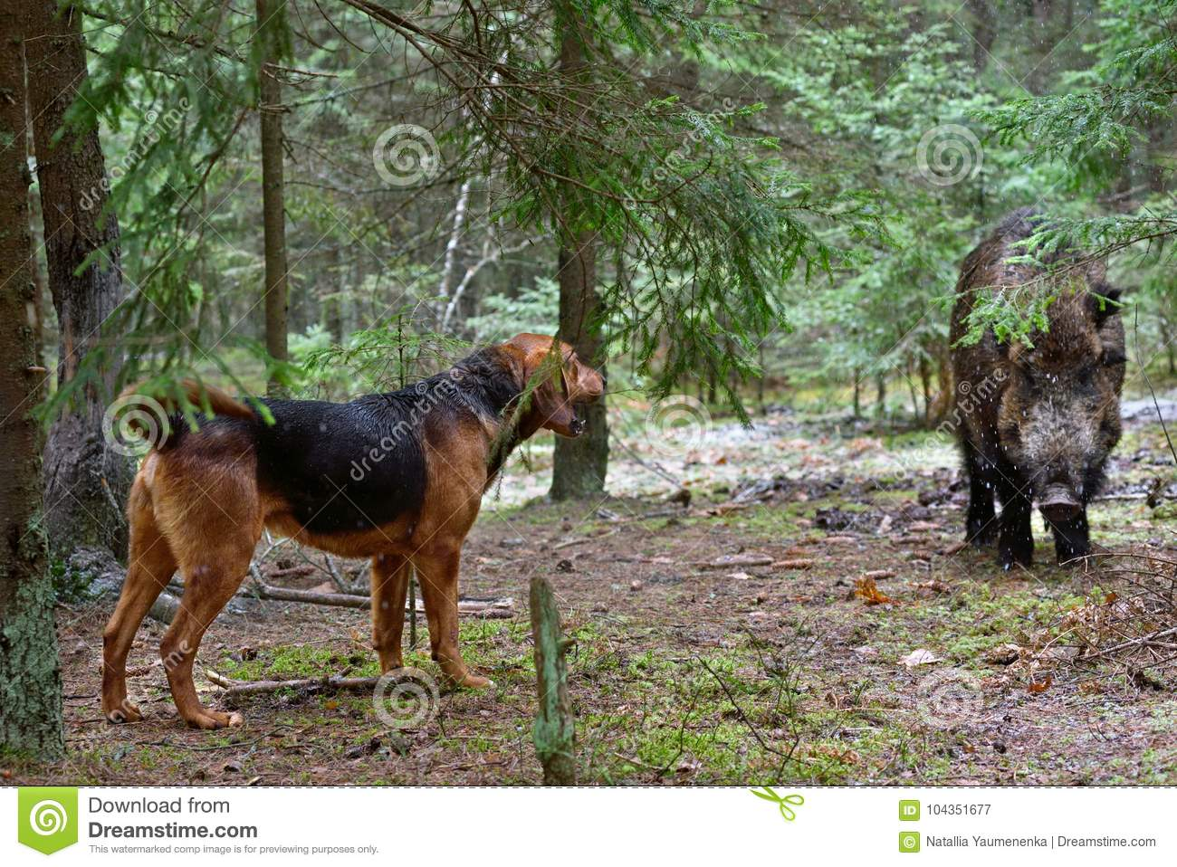 Hunting dog stock image  Image of forest, booty, reward