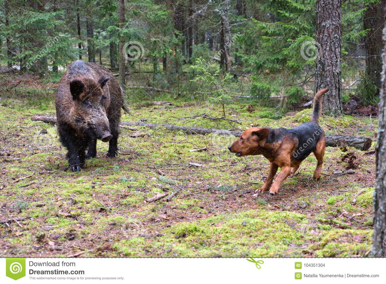 Hunting with hound stock photo  Image of gonchak, animal