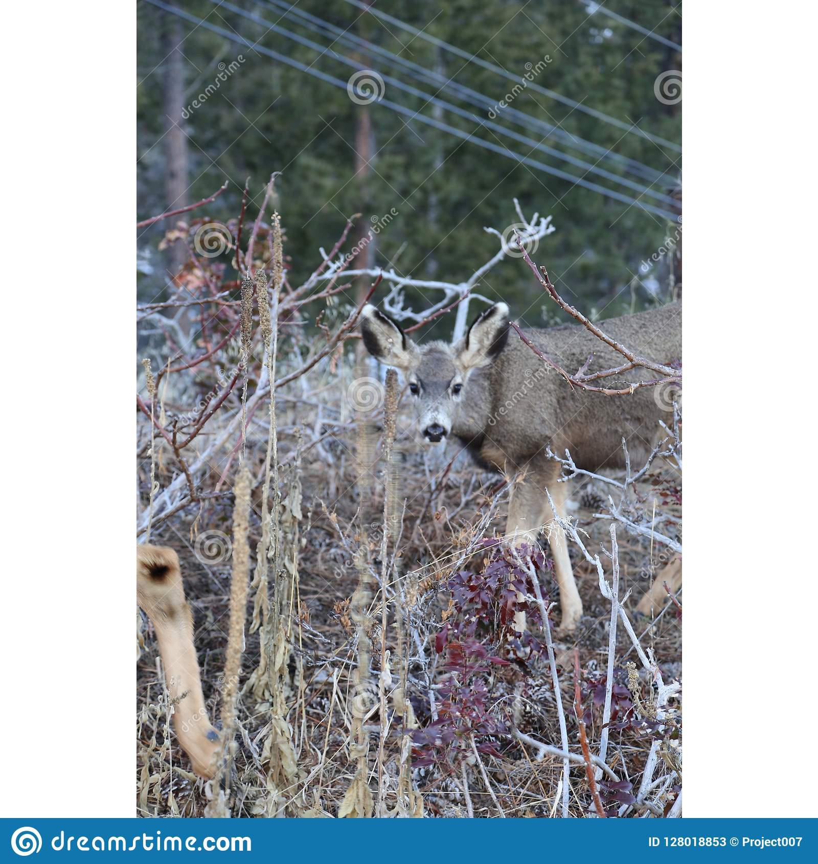 Hunting season- Deer and Elk subjects are popular for hunting or wilderness billboards or magazines.