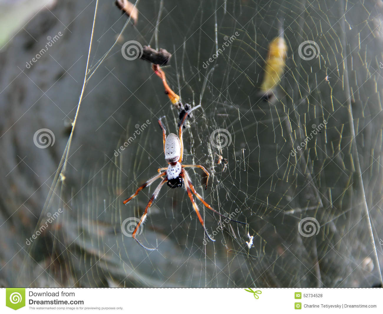 Huntsman Spider stock photo  Image of relaxing, australian