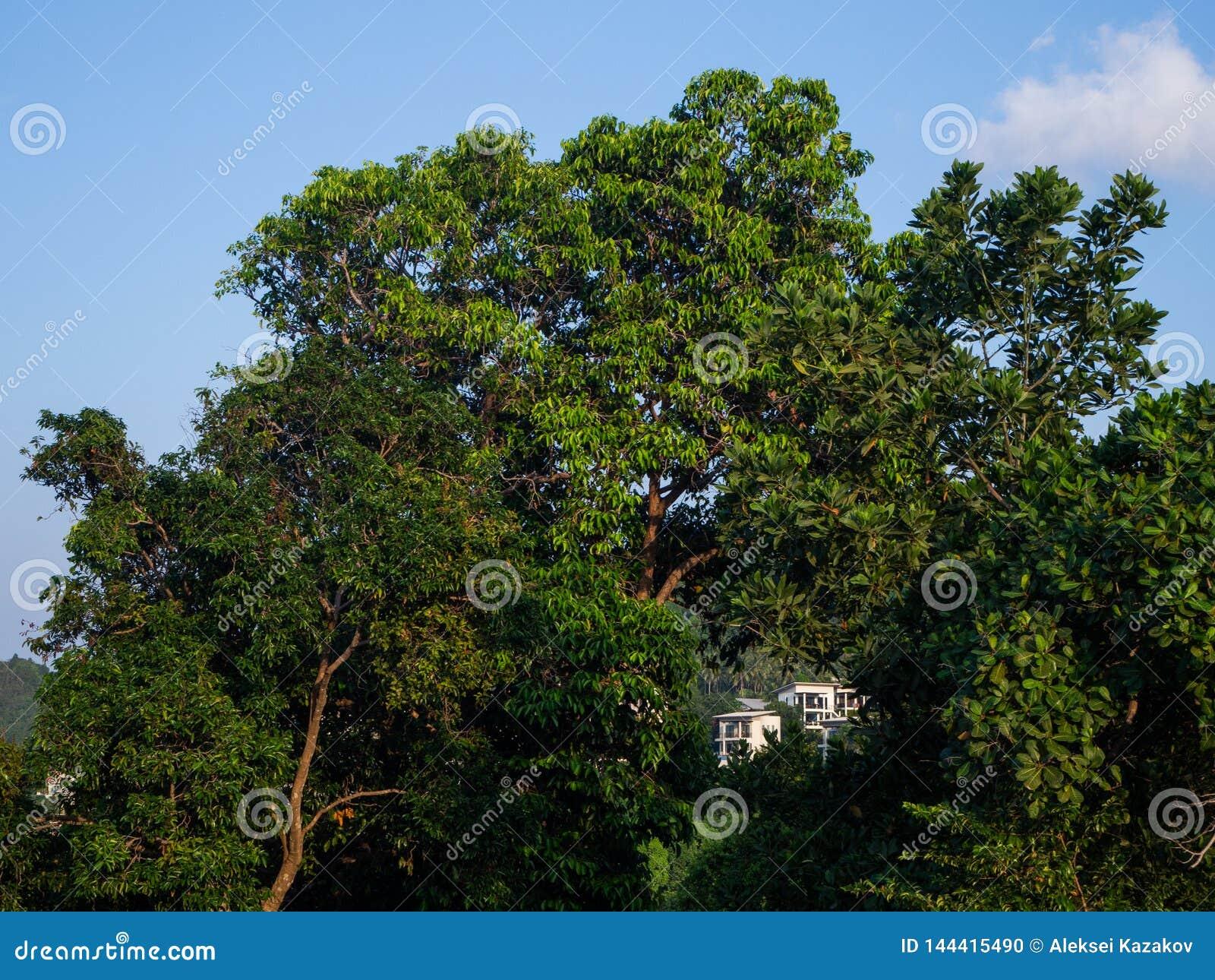 Hus på en kulle till och med träden på Koh Phangan