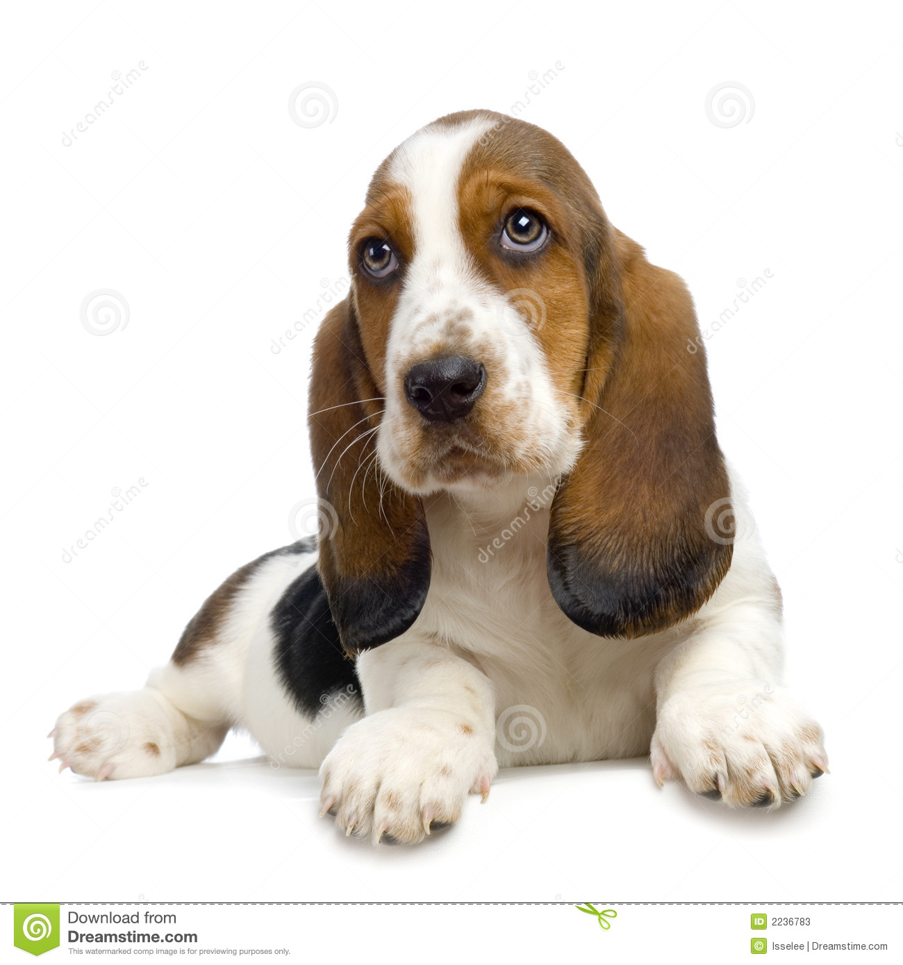 Hush Puppies stock image. Image of cute, ears, depression ...
