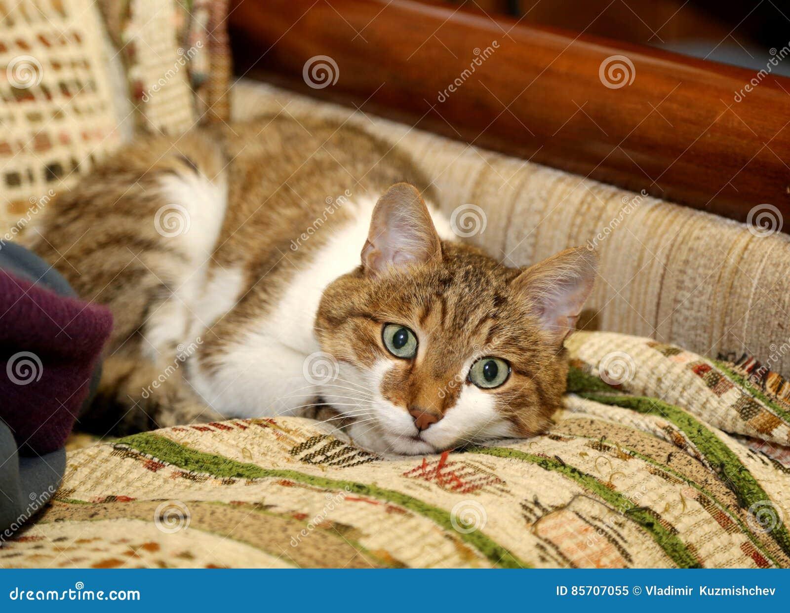 Huskatt på soffan i lägenheten