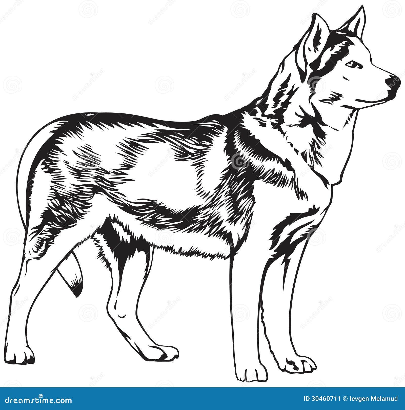 husky dog breed vector illustration stock vector illustration of states  arctic 30460711 dog sledding clipart dog sled clip art free