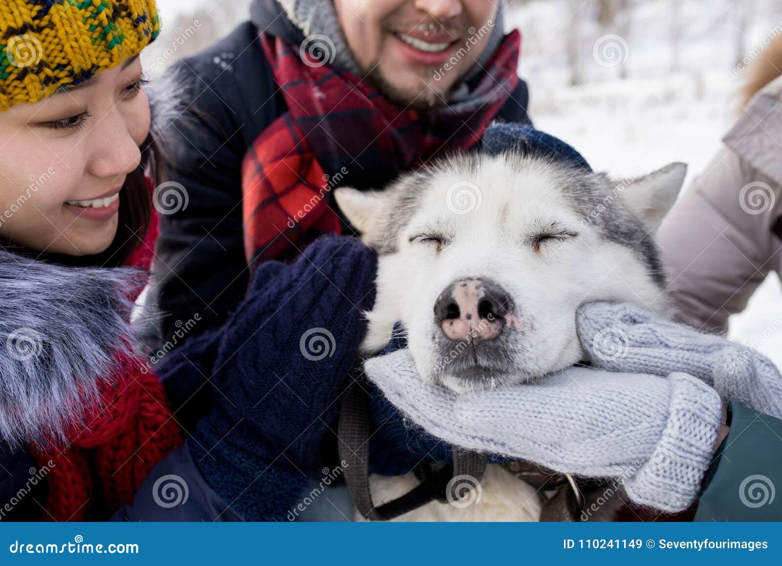 Husky Dog Enjoying Rubs