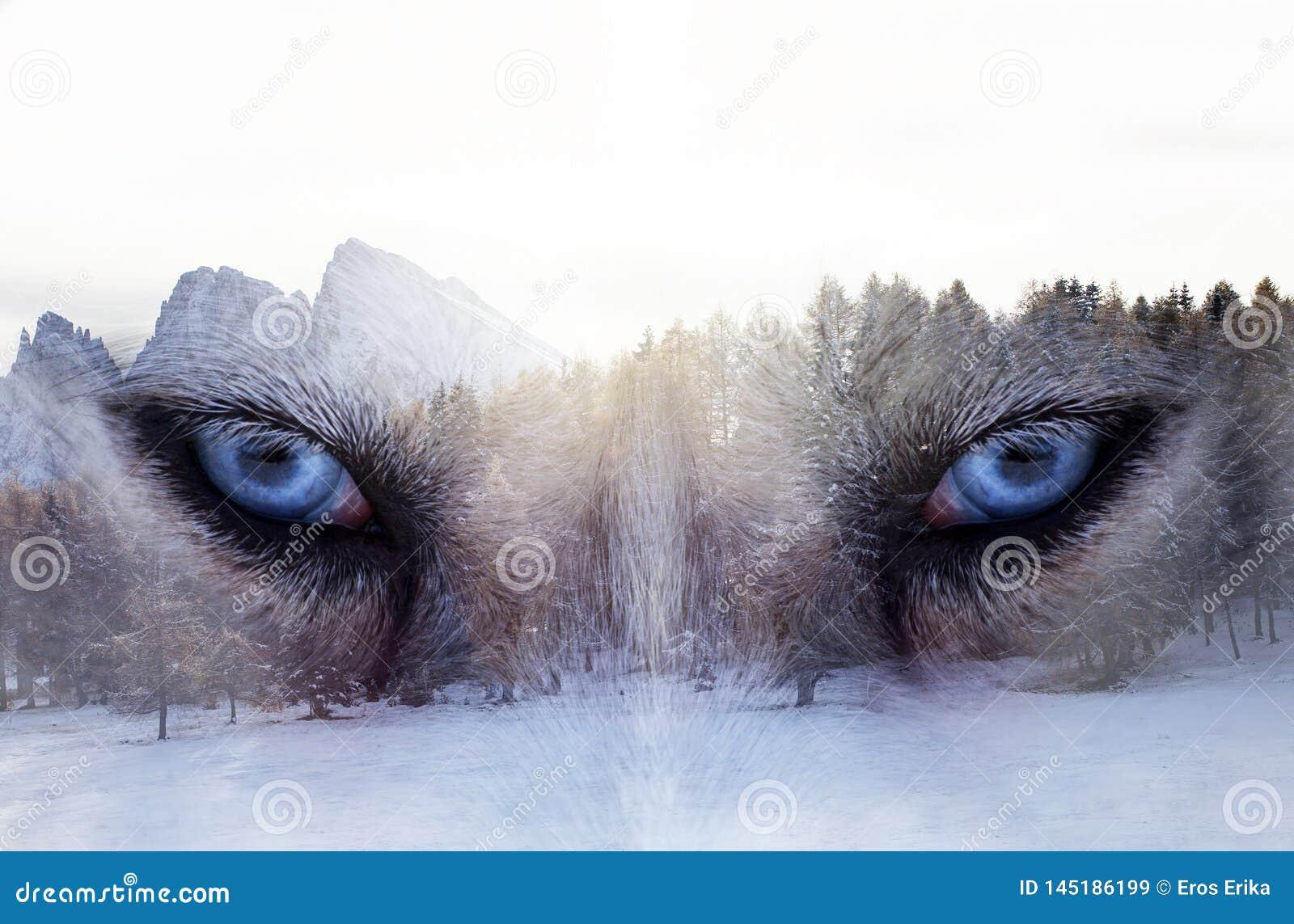 Husky dog an the forest