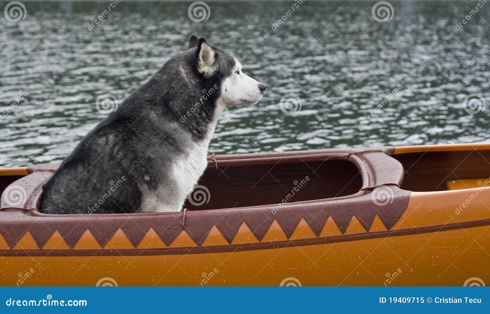 Husky lexa