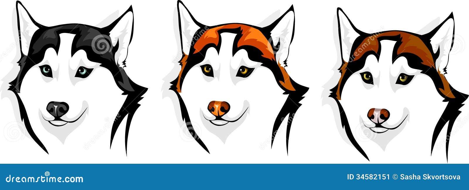 Husky - Wolf Stock Image - Image: 34582151