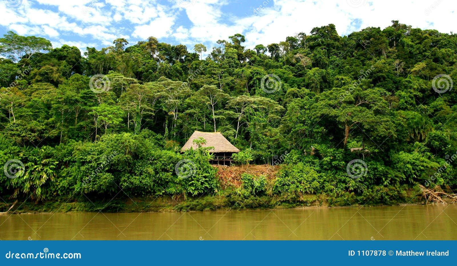 Hutte dans la forêt humide