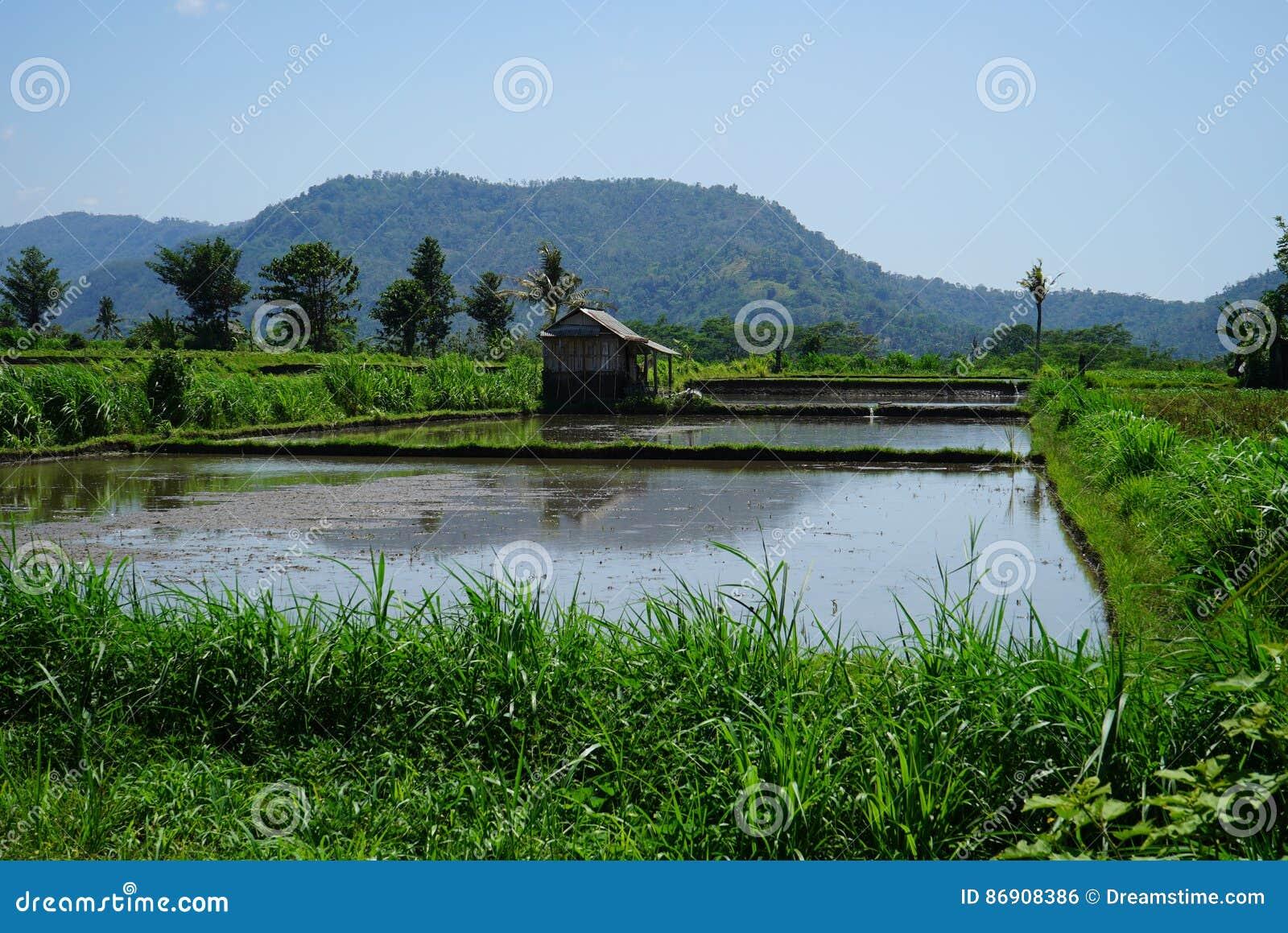 Hutte de pêche par l étang près de la montagne
