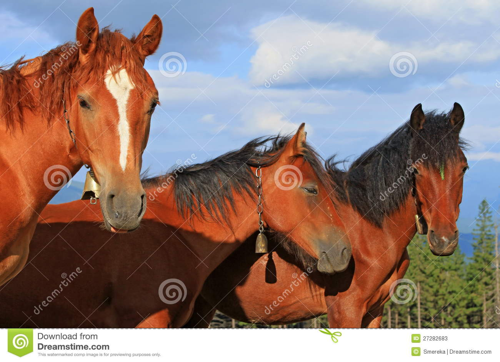 Huvud av hästar mot skyen