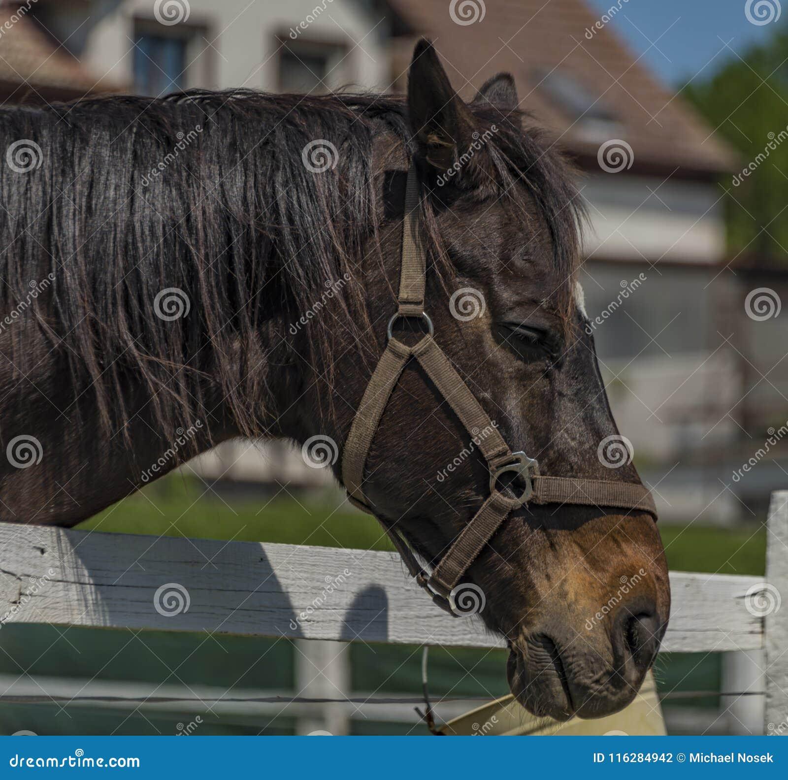 Huvud av hästen i solig dag för vår