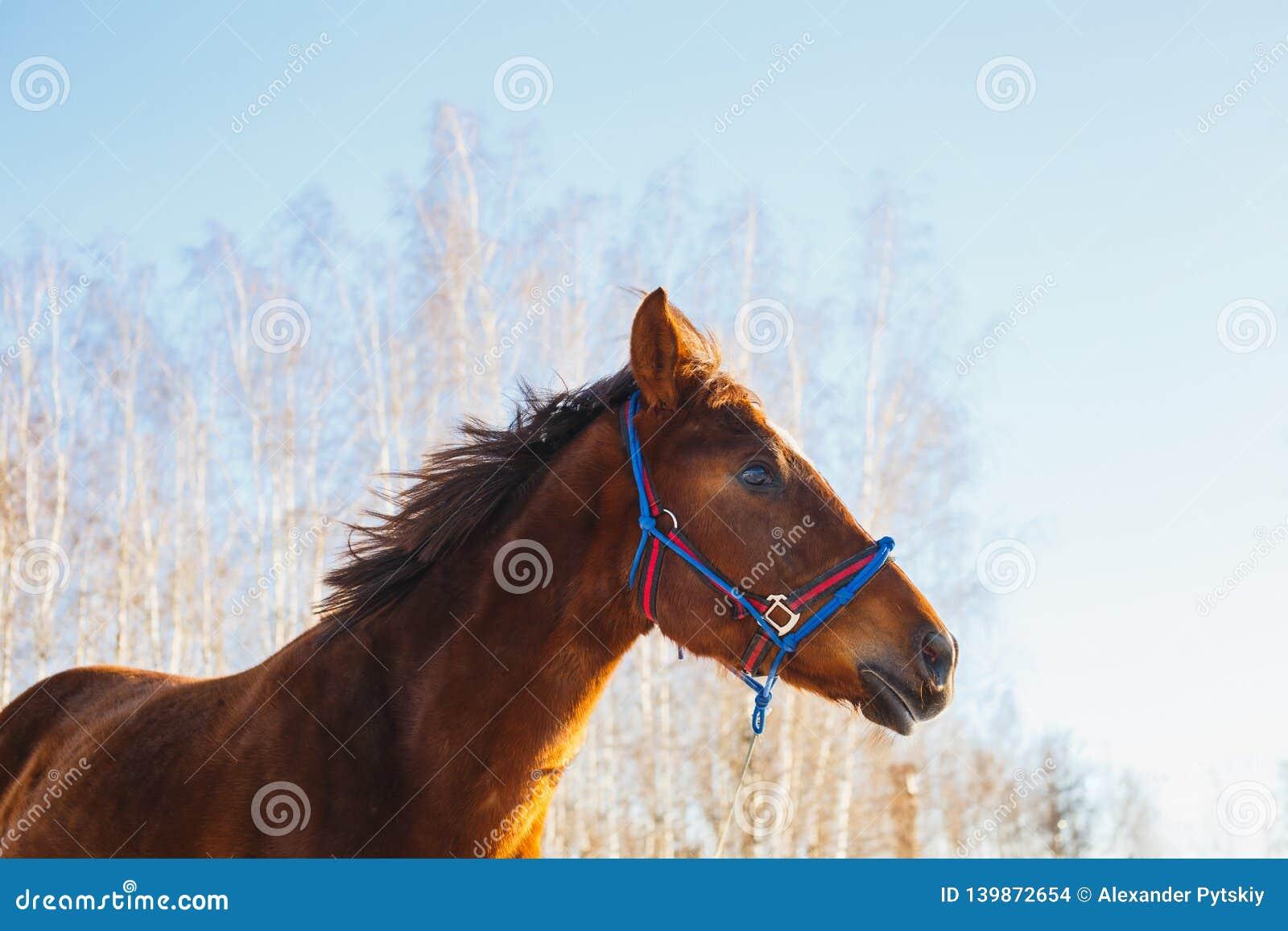 Huvud av hästen på en solig dag