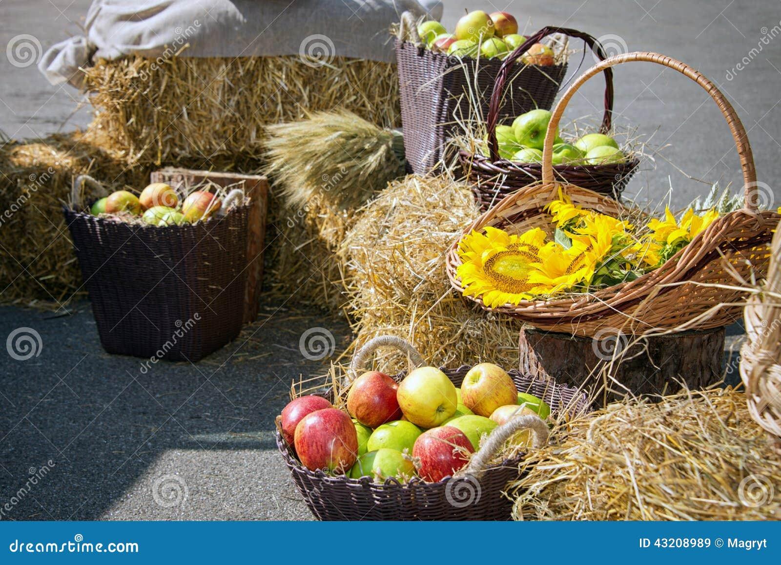 Download Huvud Av Korn, äpplen Och Solrosor Skörd På Höstacken Fotografering för Bildbyråer - Bild av gräs, objekt: 43208989