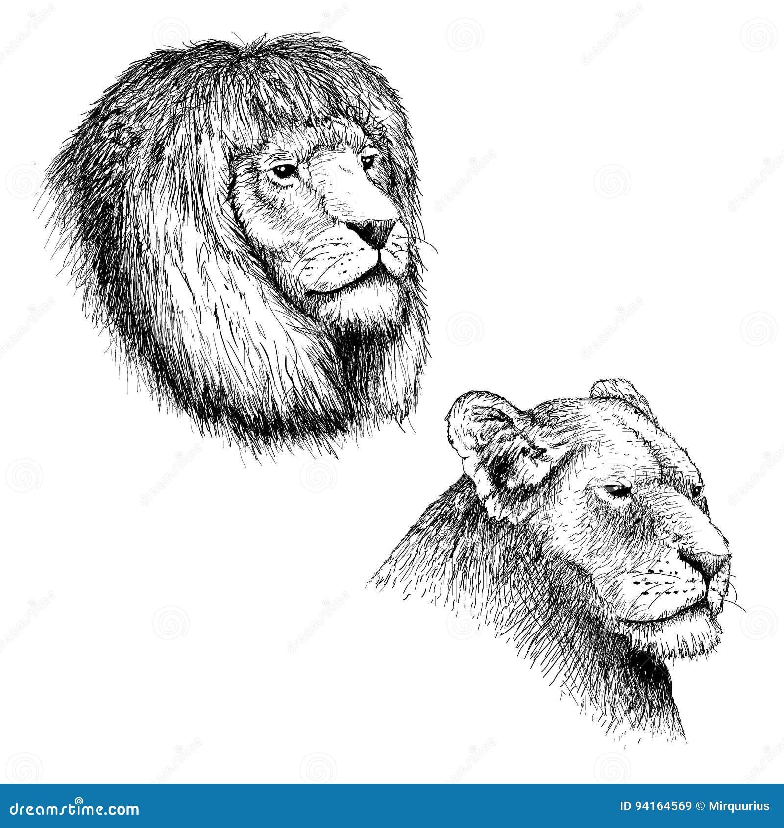 Huvud av lejonet och lejoninnan