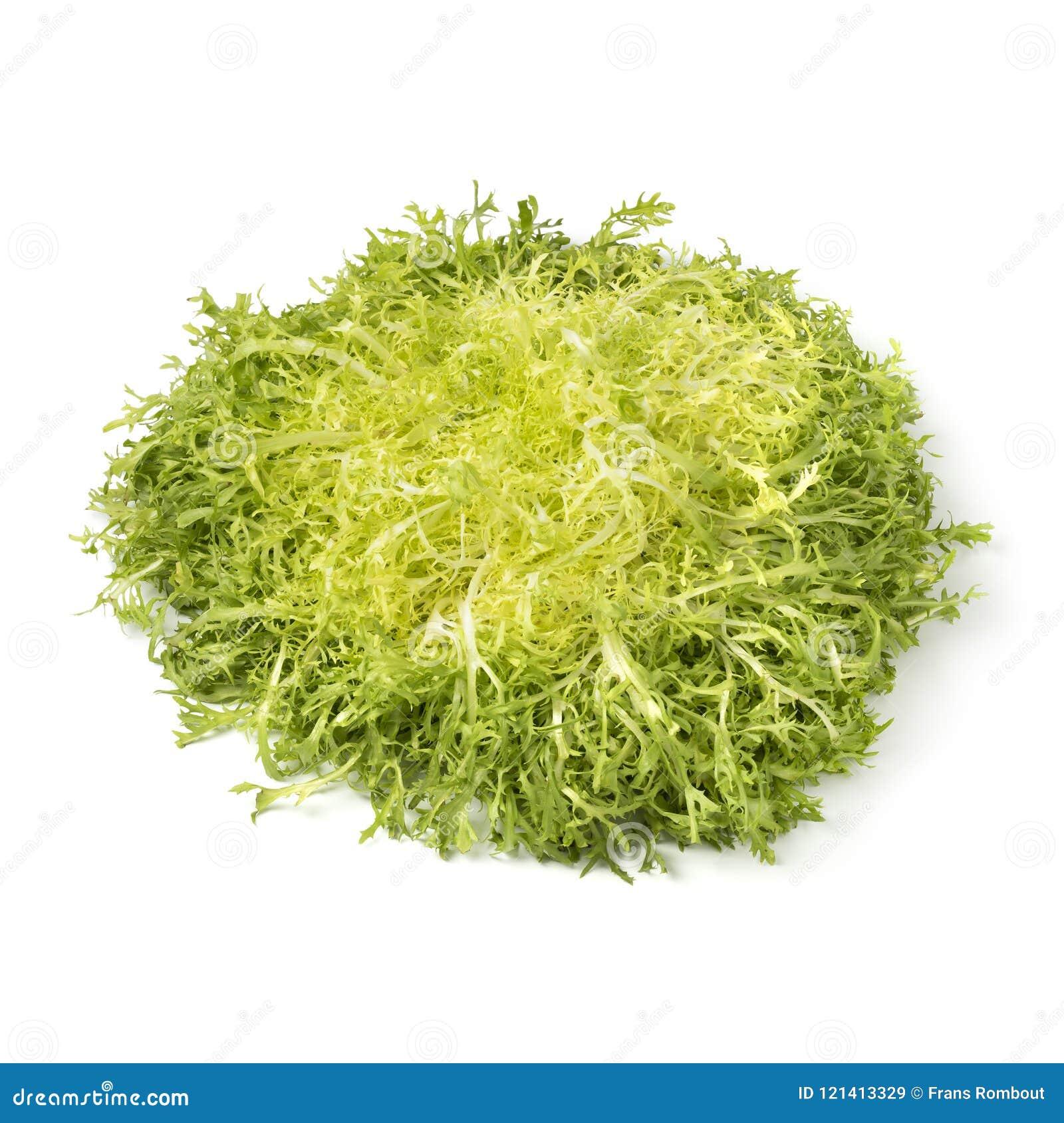 Huvud av ny friseegrönsallat