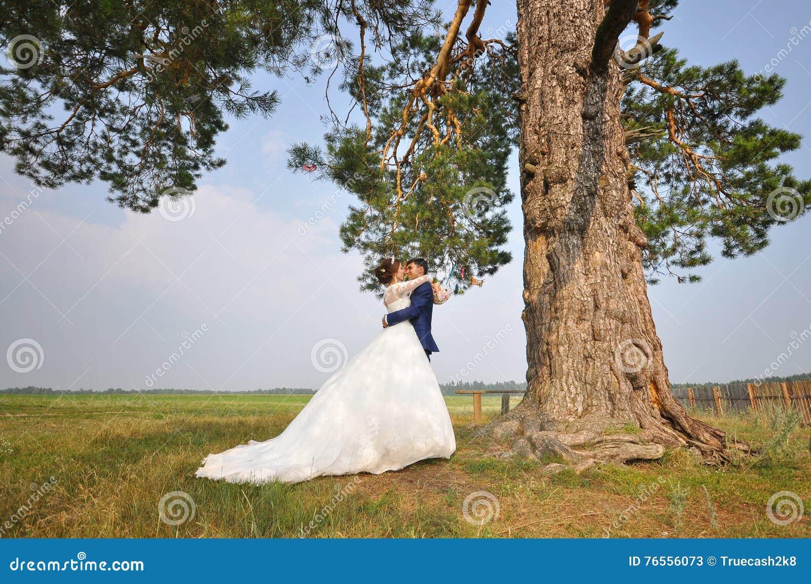 Huwelijksfoto het schieten Bruidegom en bruid die onder pijnboomboom omhelzen