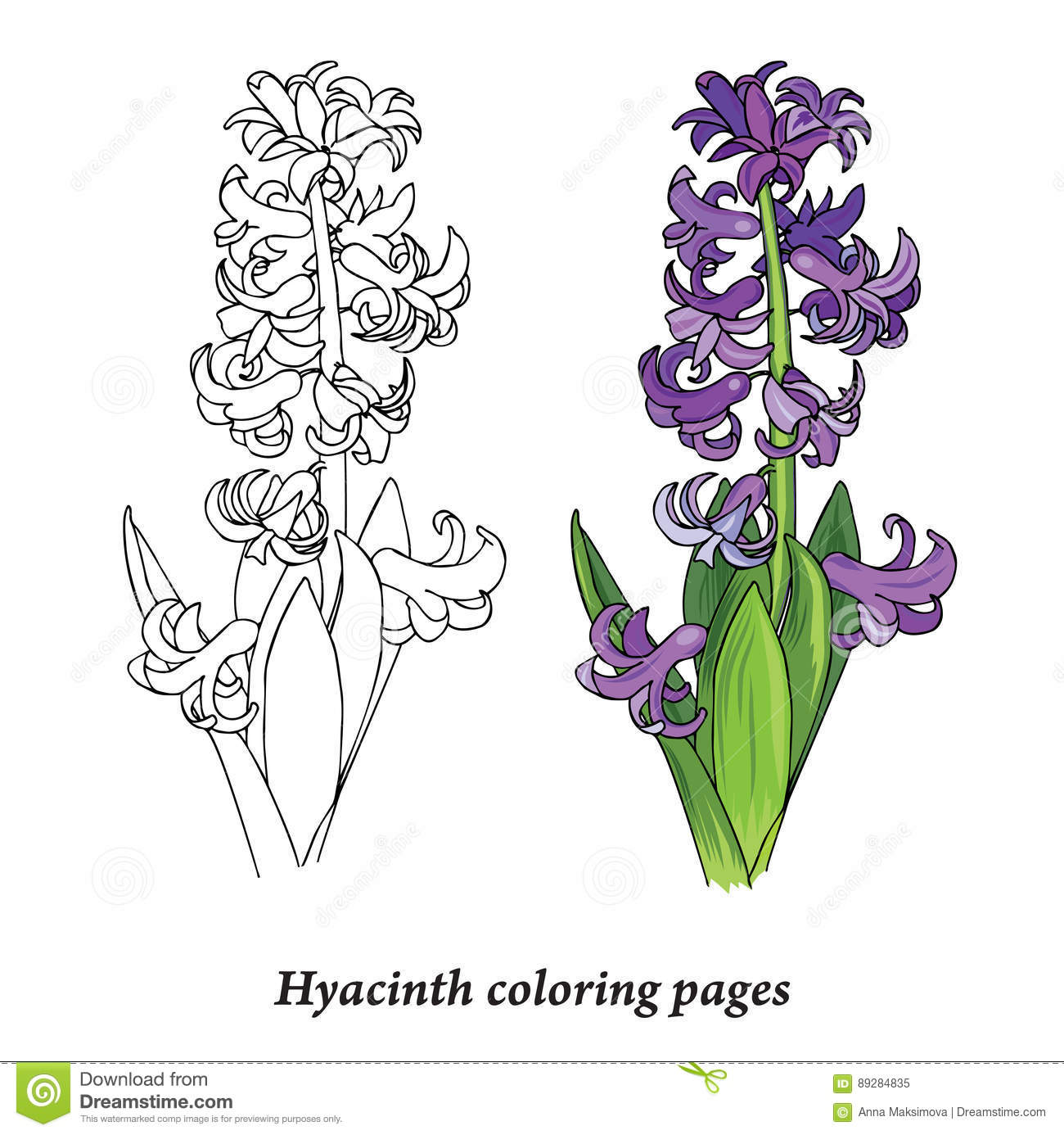 hyacinth coloring pages stock vector image 89284835