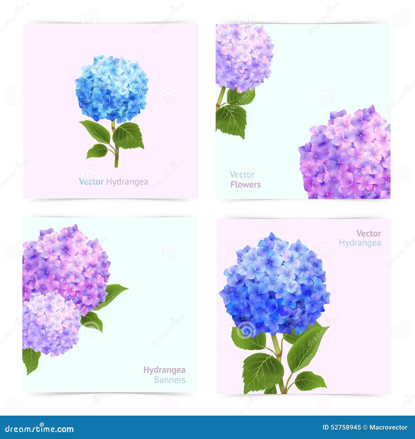 Hydrangea Cards Set Stock Vector Illustration Of Bouquet 52758945