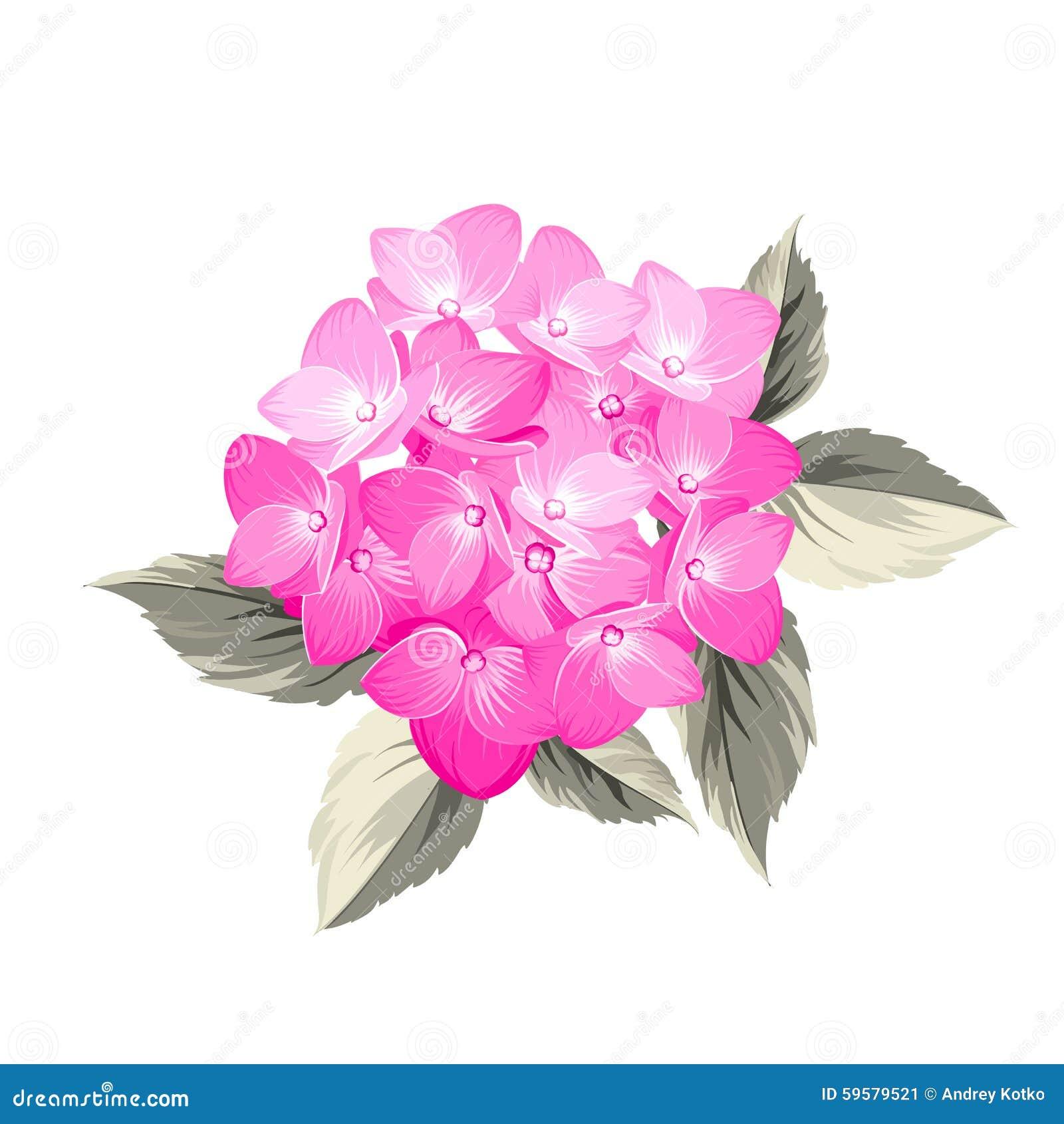 Hydrangea Flower Stock Vector Illustration Of Flower 59579521
