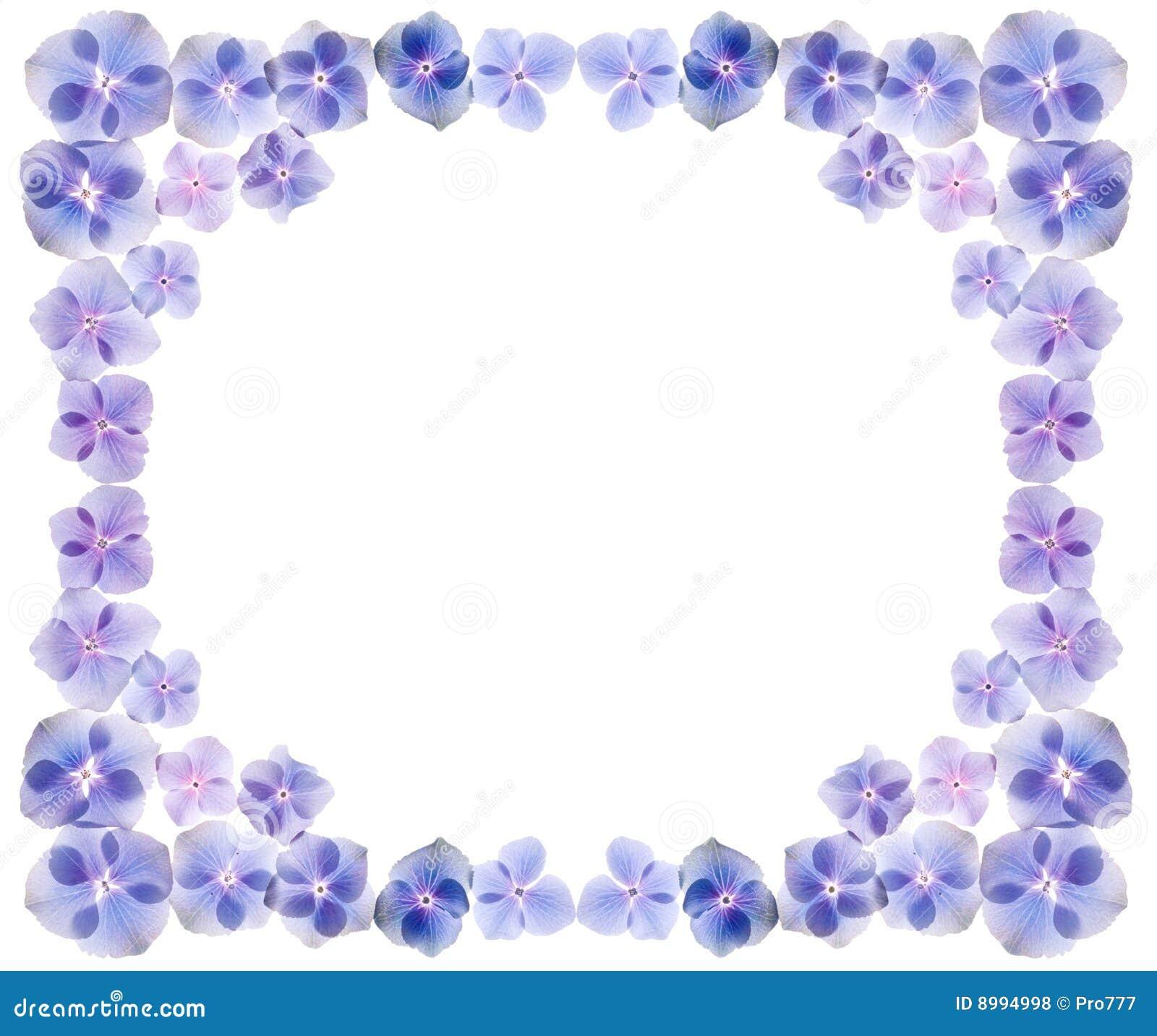 Hydrangea Flowers Frame Royalty Free Stock Photos - Image: 8994998
