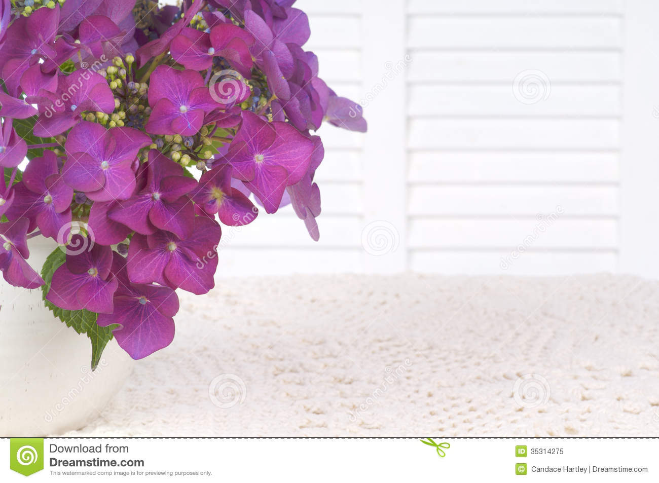 Hydrangea Flowers in a Vase on White Table Cloth with White Background Area, Room or Space for Copy, Text, or your Words.