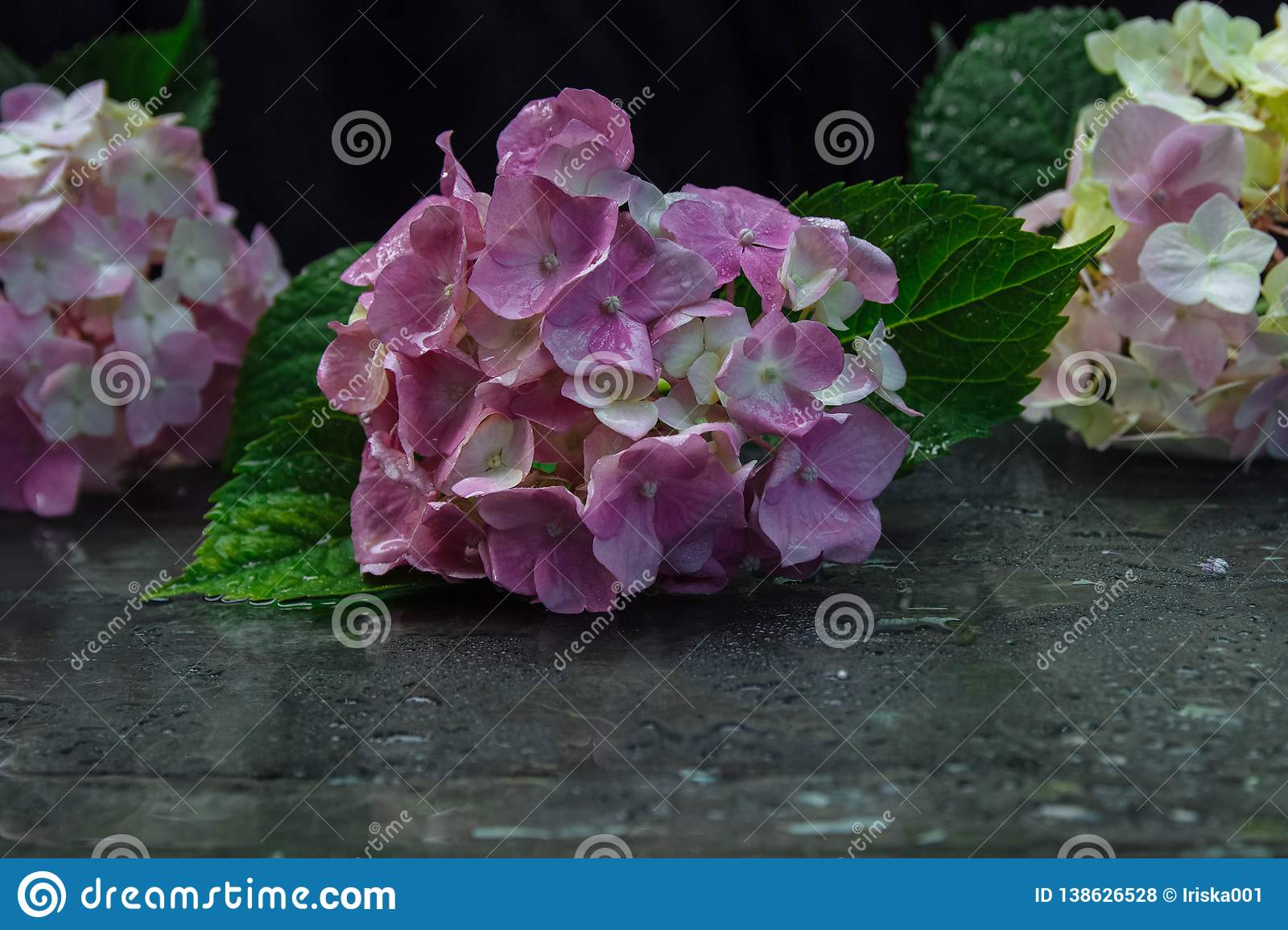 Hydrangea with reflection and water drops