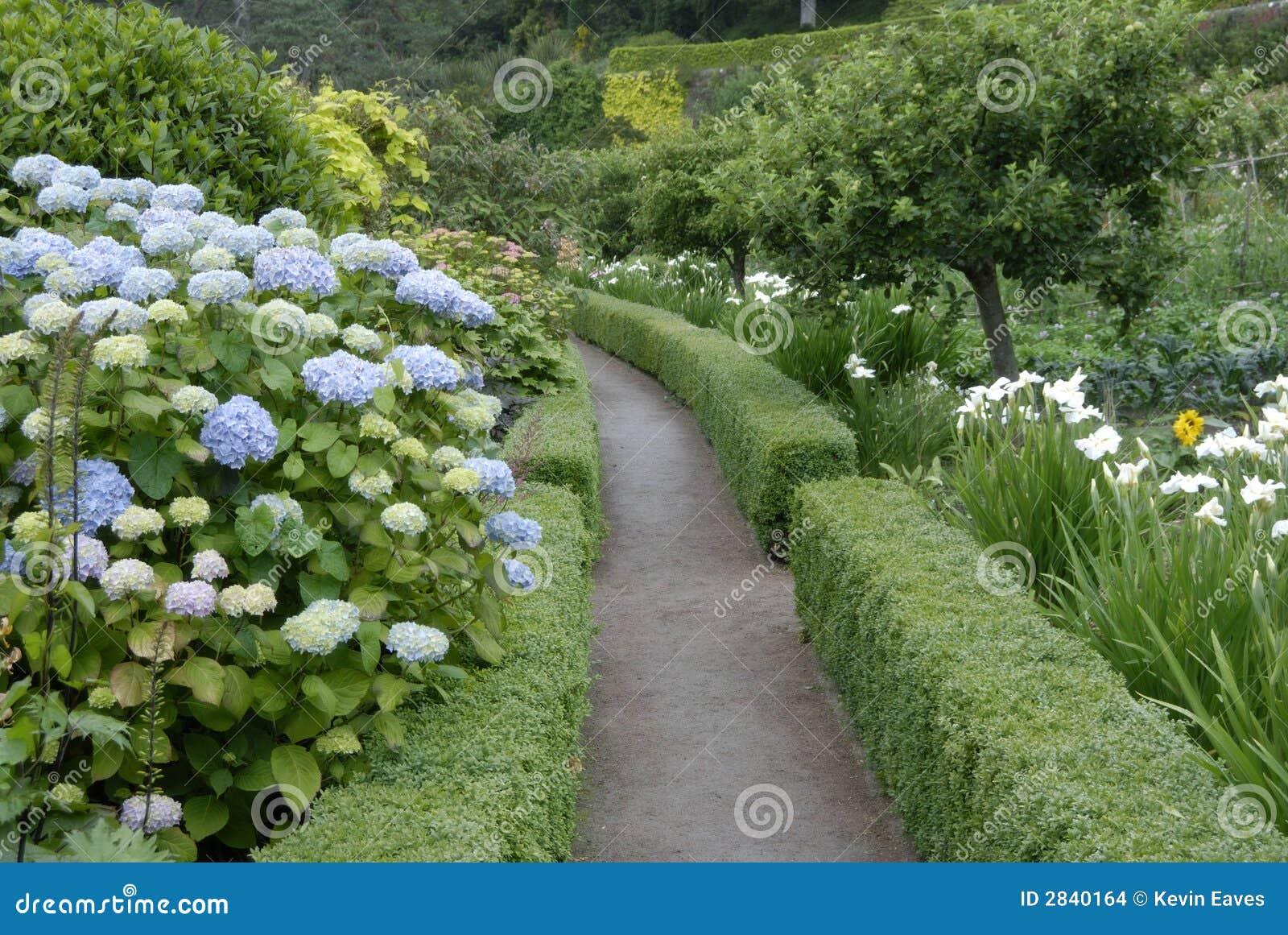 Hydrangeas, jardim de Inverewe