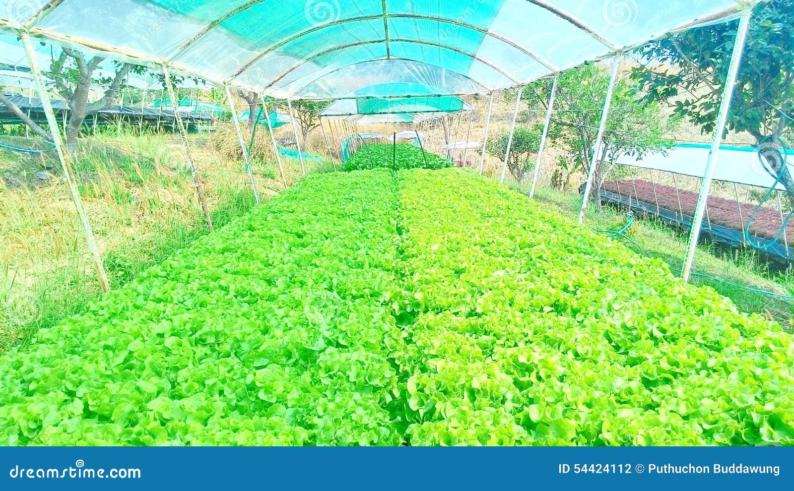 Odla utan jord